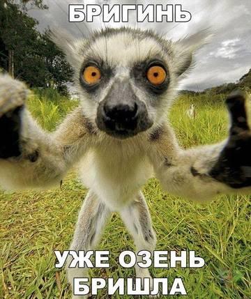 http://s7.uploads.ru/t/vUhxr.jpg