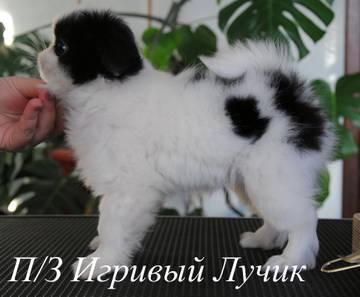 http://s7.uploads.ru/t/w5ZBm.jpg