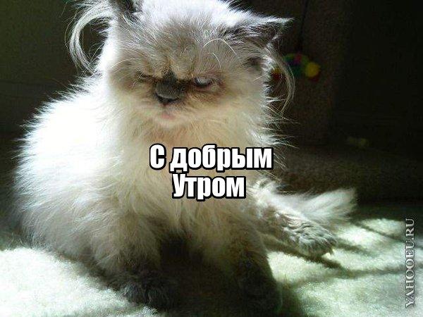 http://s7.uploads.ru/t/wS0H3.jpg
