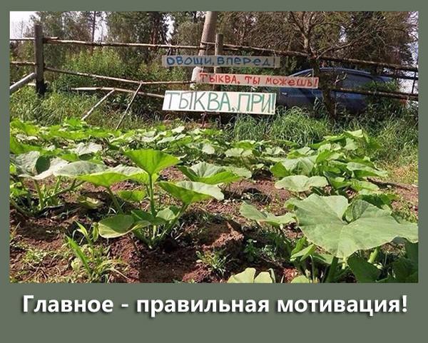 http://s7.uploads.ru/t/xjW01.jpg