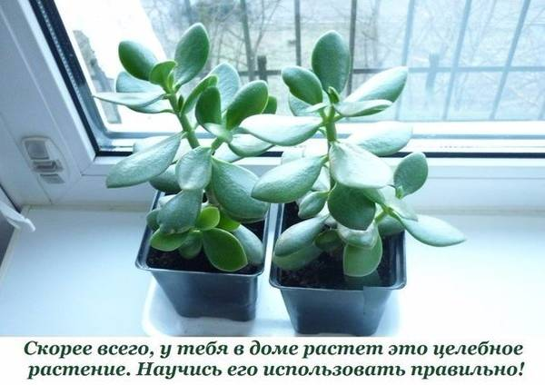 http://s7.uploads.ru/t/y1ljA.jpg