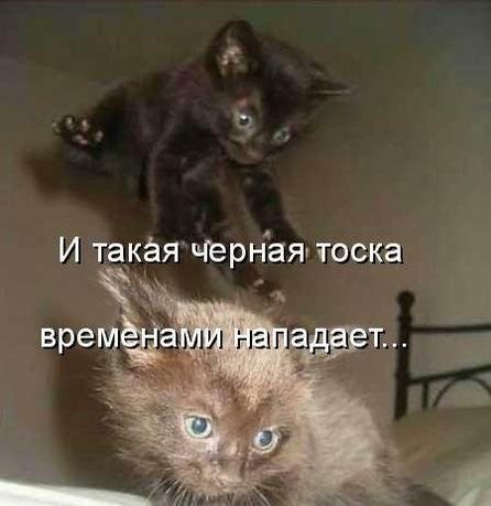 http://s7.uploads.ru/t/yZPHb.jpg