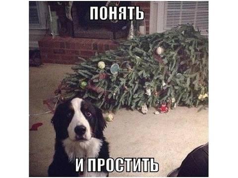 http://s7.uploads.ru/t/ym4sC.jpg