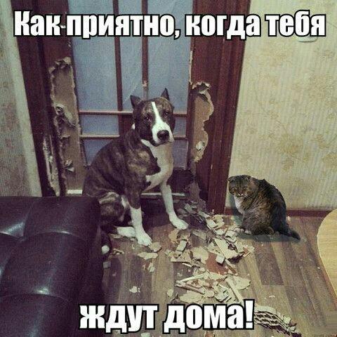 http://s7.uploads.ru/t/zf8V2.jpg
