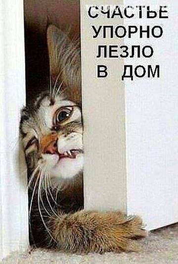http://s7.uploads.ru/t/zxJsq.jpg