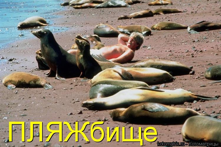 http://s7.uploads.ru/t9L2j.jpg