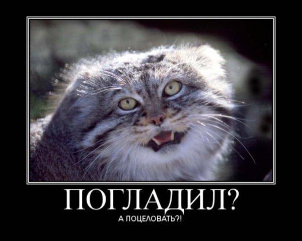 http://s7.uploads.ru/tpCe2.jpg