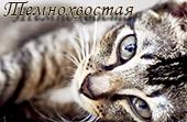 http://s7.uploads.ru/uIPLQ.jpg