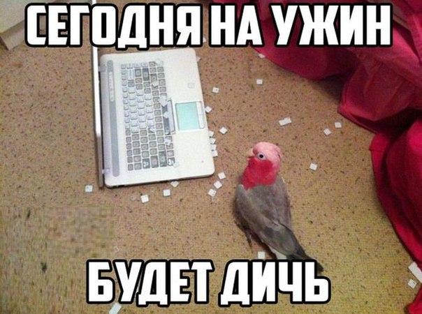 http://s7.uploads.ru/uTkeM.jpg