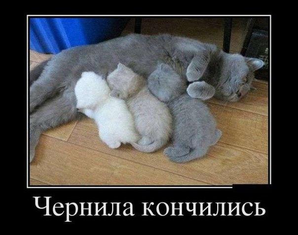 http://s7.uploads.ru/w4DLe.jpg