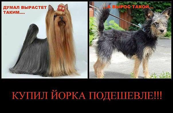http://s7.uploads.ru/wMnio.jpg