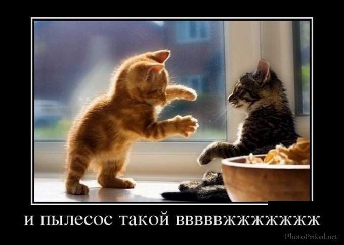 http://s7.uploads.ru/xdqgL.jpg