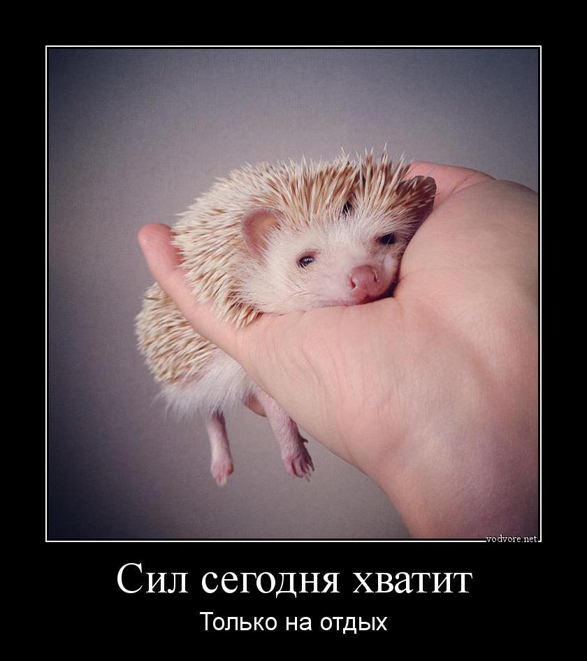 http://s7.uploads.ru/ykaEU.jpg