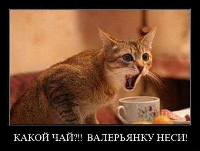 http://s7.uploads.ru/z0a7A.jpg