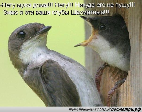http://s7.uploads.ru/zgF9a.jpg