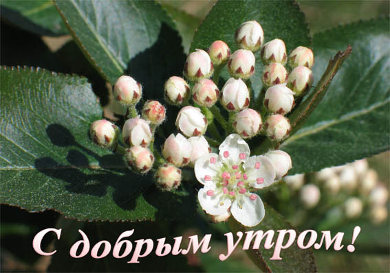 http://s7.uploads.ru/os1mL.jpg