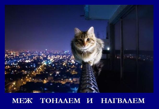 http://s7.uploads.ru/r6XnN.jpg