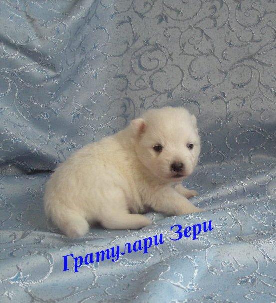 http://s7.uploads.ru/rH9v7.jpg