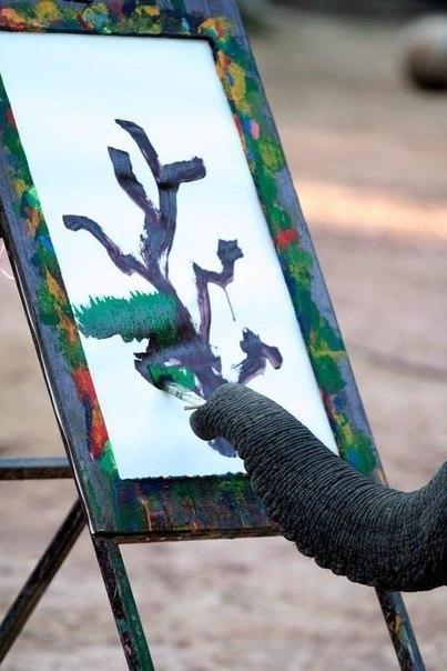 Животные. Все необычное о животных.