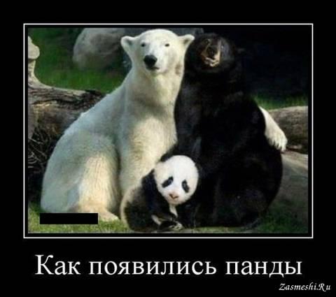 http://s7.uploads.ru/t/BkY1y.jpg