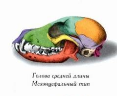 http://s7.uploads.ru/t/Fozl0.jpg