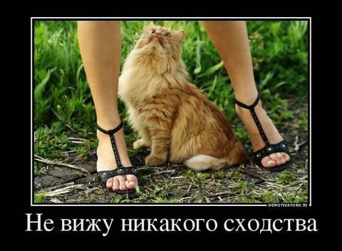 http://s7.uploads.ru/t/HZe6v.jpg