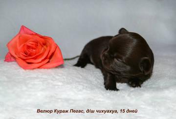 http://s7.uploads.ru/t/LB1RT.jpg