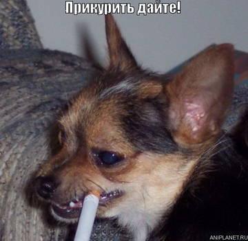 http://s7.uploads.ru/t/lRbiC.jpg