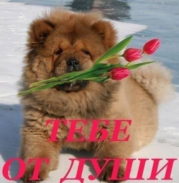 http://s7.uploads.ru/t/n3qbK.jpg