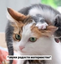 http://s7.uploads.ru/xQADW.jpg